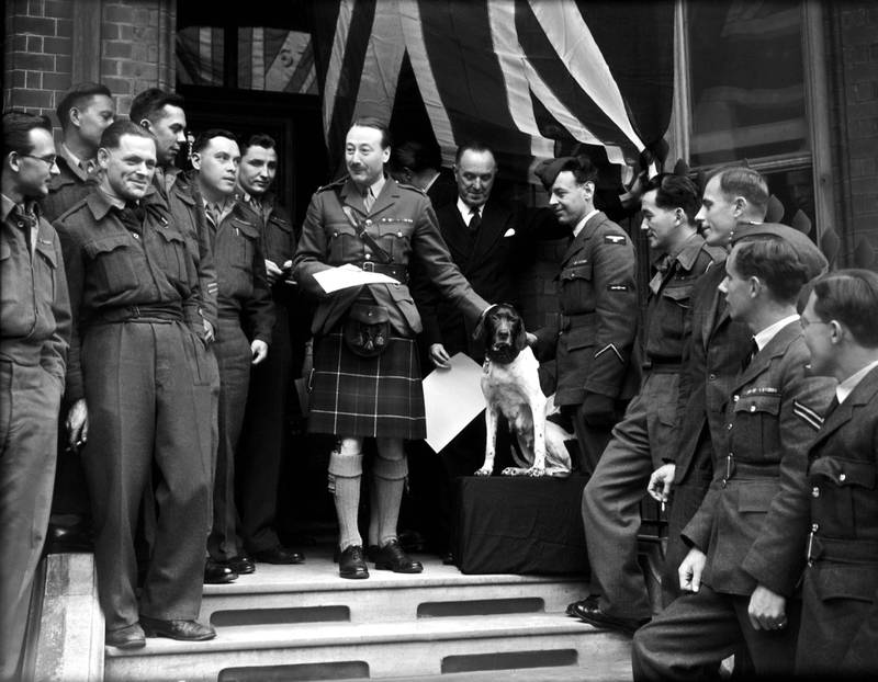 Judy the English Pointer (1936 - 1950) receives a Dickin Medal, the PDSA's version of a Victoria Cross, from Major Roderick Mackenzie, 4th Earl of Cromartie (1904 - 1989), at the headquarters of the Returned British Prisoner of War Association in Cadogan Square, London, 2nd May 1946. On the right is Judy's owner, Leading Aircraftman Frank Williams (1919 - 2006), who received the White Cross of St Giles. Formerly a ship's dog on board HMS Gnat and HMS Grasshopper, Judy helped save the lives of servicemen after the Grasshopper was sunk. She then spent three and a half years in Japanese prisoner-of-war camps, narrowly escaping death many times. She was the only dog to be registered as a Second World War Prisoner of War. (Photo by Topical Press Agency/Hulton Archive/Getty Images)