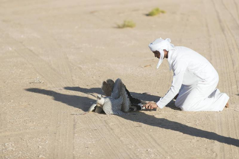 ABU DHABI, UNITED ARAB EMIRATES - DEC 6, 2017Habara hunting trip at the fourth International Festival of Falconry. Tom is one of the original 27 falconers that were in Abu Dhabi in 1976 to receive Sheikh Zayed's invitation to falconers from around the world to convene in the desert of Abu Dhabi and build a strategy for the sport's development.(Photo by Reem Mohammed/The National)Reporter: Anna ZachariasSection: NA