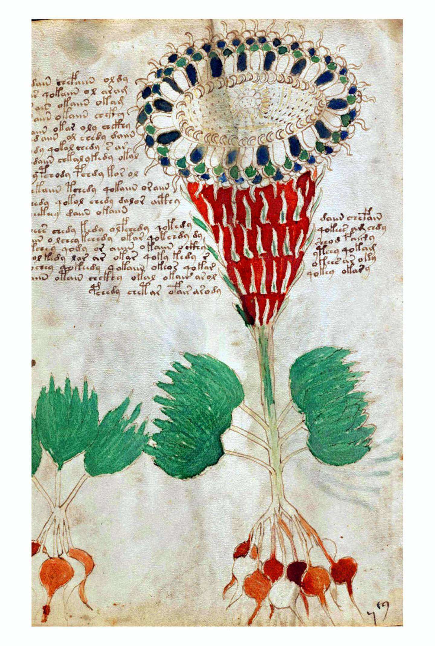 The Voynich Manuscript is considered by scholars to be most interesting and mysterious document ever found. Dated 16th century. (Photo by: Photo12/Universal Images Group via Getty Images)
