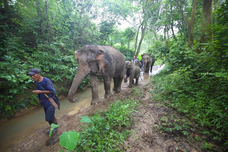 Elephants. Courtesy Mandalao Tours