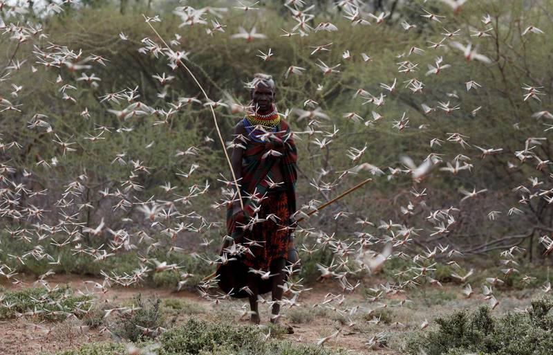 """A woman from the Turkana tribe walks through a swarm of desert locusts at the village of Lorengippi near the town of Lodwar, Turkana county, Kenya, July 2, 2020. REUTERS/Baz Ratner/File Photo     TPX IMAGES OF THE DAY      SEARCH """"GLOBAL POY"""" FOR THIS STORY. SEARCH """"REUTERS POY"""" FOR ALL BEST OF 2020 PACKAGES."""