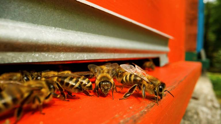 An image that illustrates this article Bee-keeping in Saudi Arabia's sweet spot