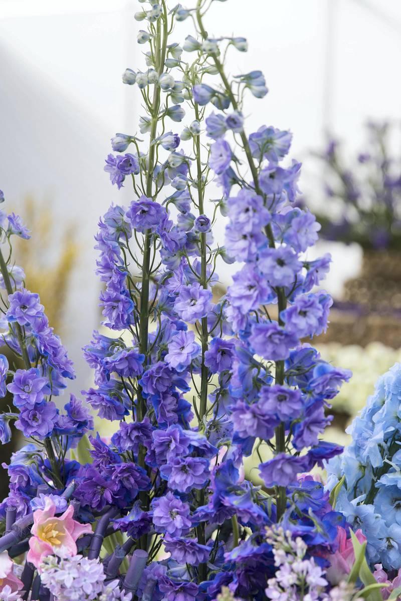 DUBAI, UNITED ARAB EMIRATES - Feb 22, 2018.Rex Tarubal, UAE, floral arrangement at Dubai International Flower Festival.(Photo: Reem Mohammed/ The National)Reporter: Melanie HuntSection: WK