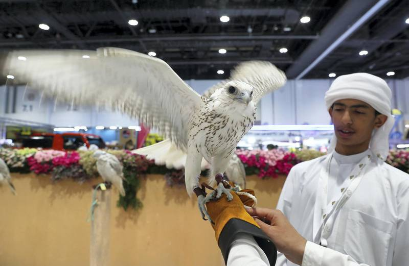 ABU DHABI ,  UNITED ARAB EMIRATES , AUGUST 27 – 2019 :- Visitor looking the Falcon at the Falcon Center during the ADIHEX 2019 held at ADNEC in Abu Dhabi. ( Pawan Singh / The National ) For News/Online/Instagram/Big Picture. Story by Daniel