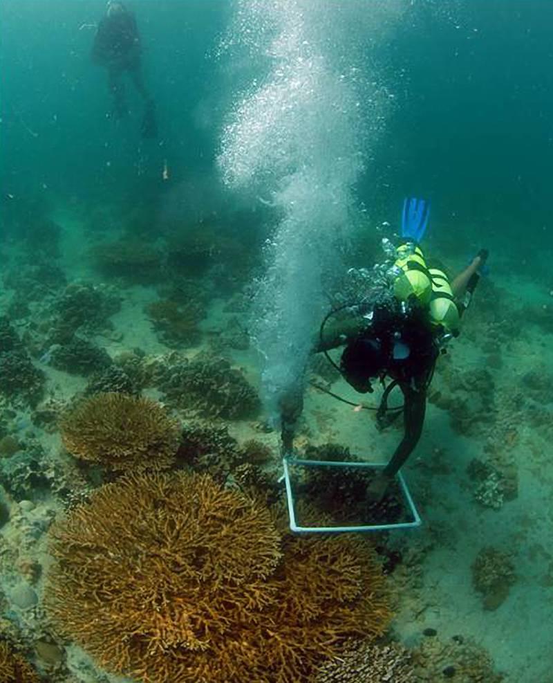 Provided photo of  John Burt using a pneumatic drill to install coral monitoring equipment on the sea-bottom at Ras Ghanada reef in Ghantoot, UAE.  Courtesy John Burt *** Local Caption ***  drill.jpg
