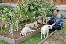 South Korea President Moon calls for ban on eating dog meat