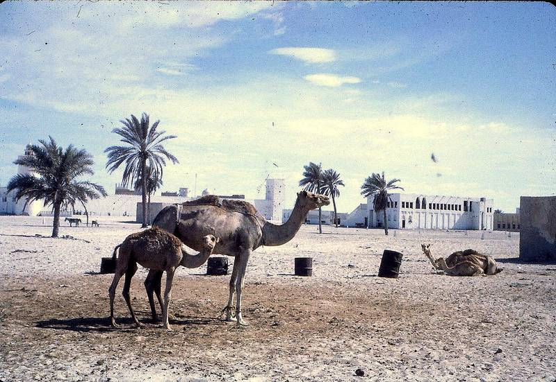A photograph from the John Vale archive, a Briton who worked in the Trucial States / UAE for the oil industry from the late 1950sCourtesy John Vale