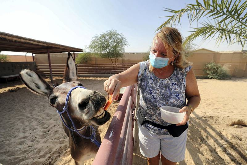 Dubai, United Arab Emirates - Reporter: N/A. News. Covid-19/Coronavirus. Viviane from The Camel farm tourist attraction feeds a donkey with Covid-19 precautions in place. Saturday, October 10th, 2020. Dubai. Chris Whiteoak / The National