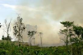 Ten Unesco forests emit more carbon dioxide than they absorb