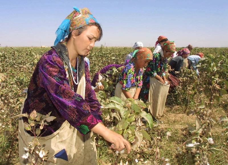 """Uzbek students pick parched cotton, Uzbekistan's """"white gold,"""" in the Uzbek town of Termez, a few yards from the Afghanistan border Thursday, Sept. 27, 2001. Termez is poised to be on the front line after Uzbekistan offered to help Washington in possible  retaliation for the Sept. 11 attacks.  (AP Photo/Efrem Lukatsky)"""