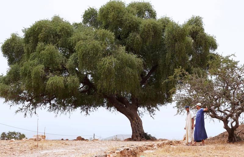 Men walk near an argan tree in Tiout, near Taroudant, Morocco June 9, 2021. Picture taken June 9, 2021. REUTERS/Abdelhak Balhaki