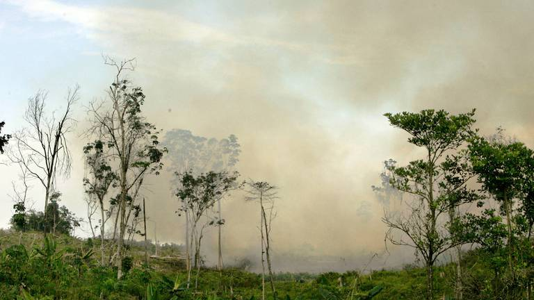 An image that illustrates this article Ten Unesco forests emit more carbon dioxide than they absorb