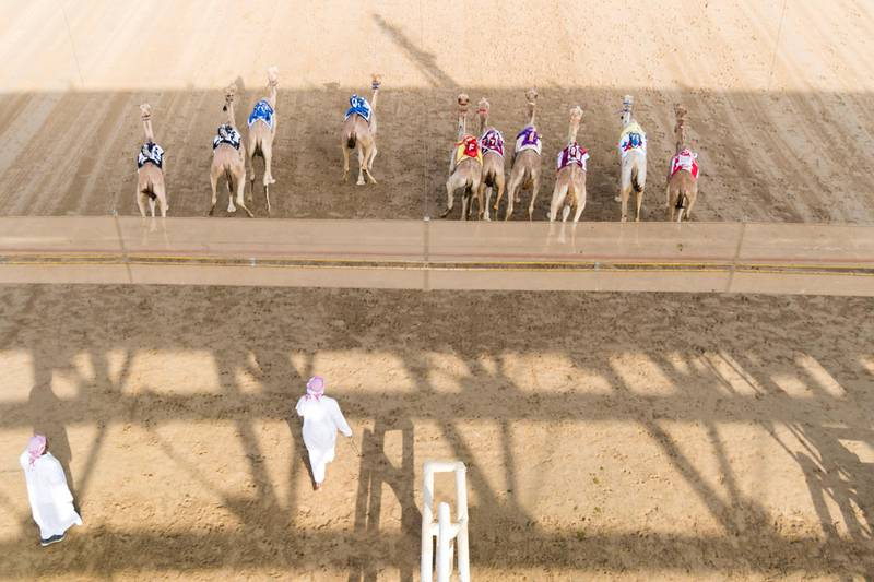 DUBAI, UNITED ARAB EMIRATES - Feb 15, 2018.Camels at the start line at Al Marmoum Race Track.The fastest camels in the Gulf will compete for cash, swords, rifles and luxury vehicles totalling Dh95 million at the first annual Sheikh Hamdan Bin Mohammed Bin Rashid Al Maktoum Camel Race Festival in Dubai.(Photo: Reem Mohammed/ The National)Reporter:Section: NA