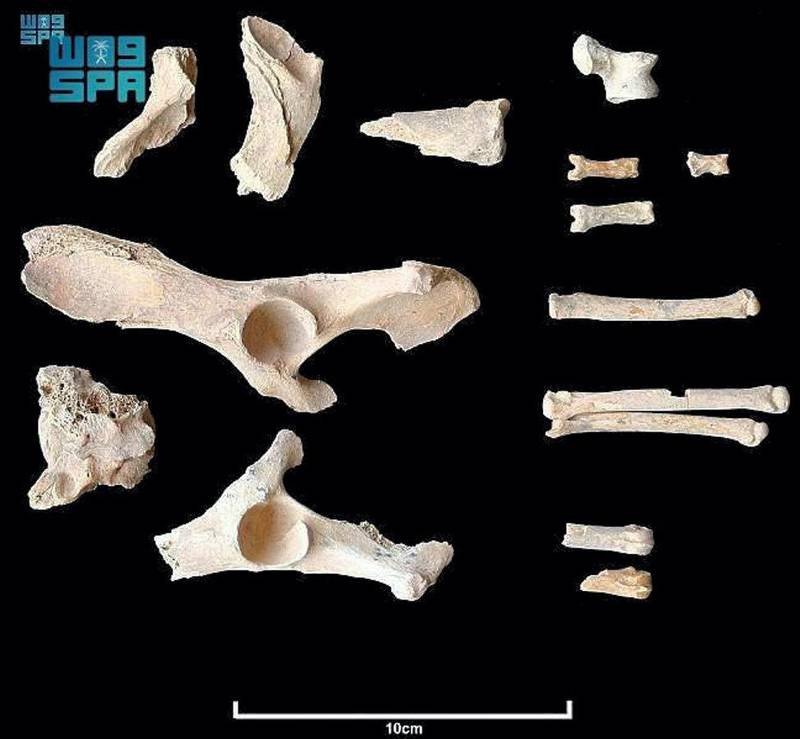 The Royal Commission for Al-Ula revealed that a team of archaeologists in the province of Al-Ula, northwestern Saudi Arabia, has discovered the oldest evidence of dogs that coexisted with humans in the Arabian Peninsula, dating back to 4000-4200 BC. SPA