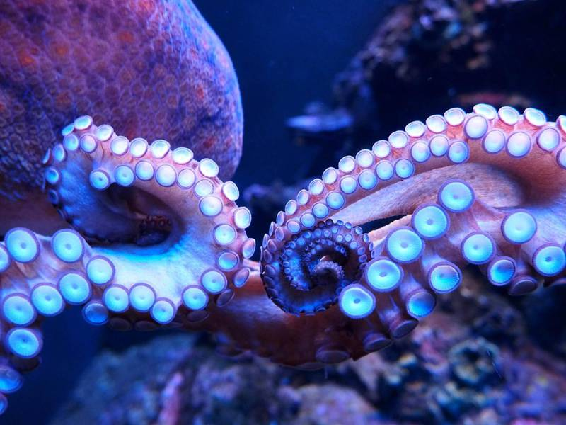 Close-Up Of Octopus In Sea. Getty Images