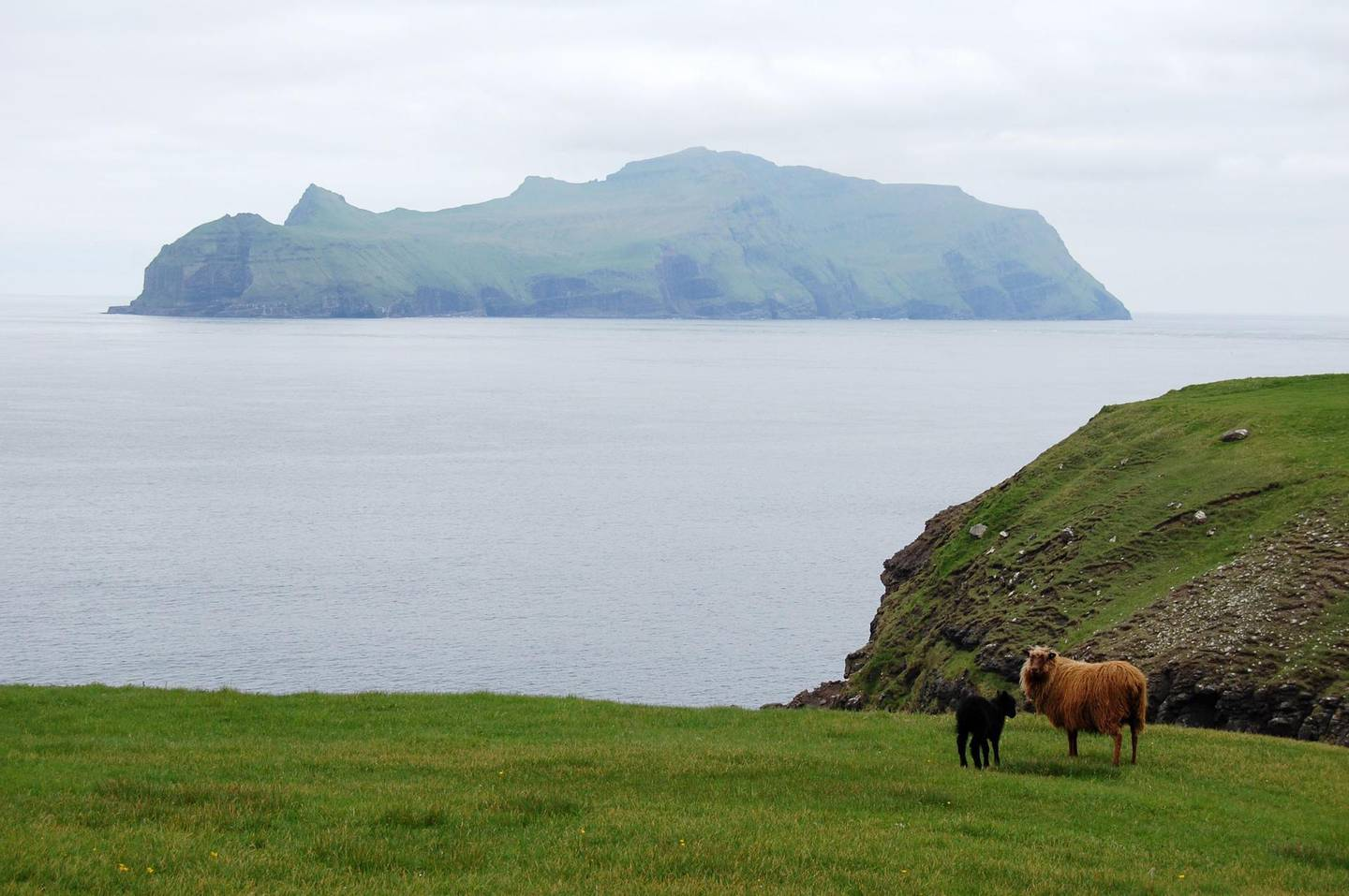 A picture taken on June 6, 2018, shows sheep in a field near the village of Gasadalur in Vagar, one of the Faroe Islands located between the North Atlantic Ocean and Norwegian Sea.  Located more than 1,100 kilometres (more than 680 miles) northwest of powerhouse Copenhagen, the Faroe Islands have since 1948 had their own white, blue and red flag with an offset cross, their own language originating from the Viking's Old Norse and institutions and culture.  / AFP / Pierre-Henry DESHAYES