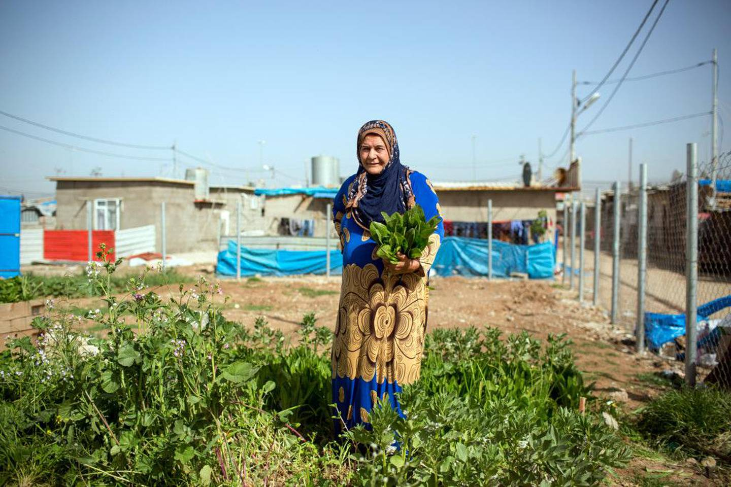 Women are working on their raised-bed gardens, which are part of the Liberation Garden, founded by the Lemon Tree Trust Foundation.Domiz refugee camp in northern Iraq is established in 2012 and provides shelter for primarily Syrian Kurds. Since 2015 the British NGO the Lemon Tree Trust supports the development of urban agriculture and greening innovation for refugees and displaced people and promoting food production well-being and community. With the refugee community in camp Domiz The Lemon Tree Trust organises a community garden and supports gardening around the shelters.  ©2018 Photo by Dirk-Jan Visser