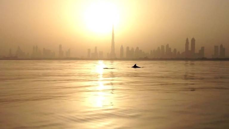 An image that illustrates this article Scientists use public sightings to learn more about UAE's marine mammals