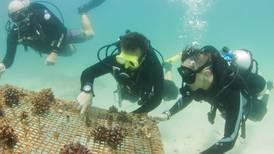 Artificial reefs sunk off Fujairah coast to revive threatened marine habitats