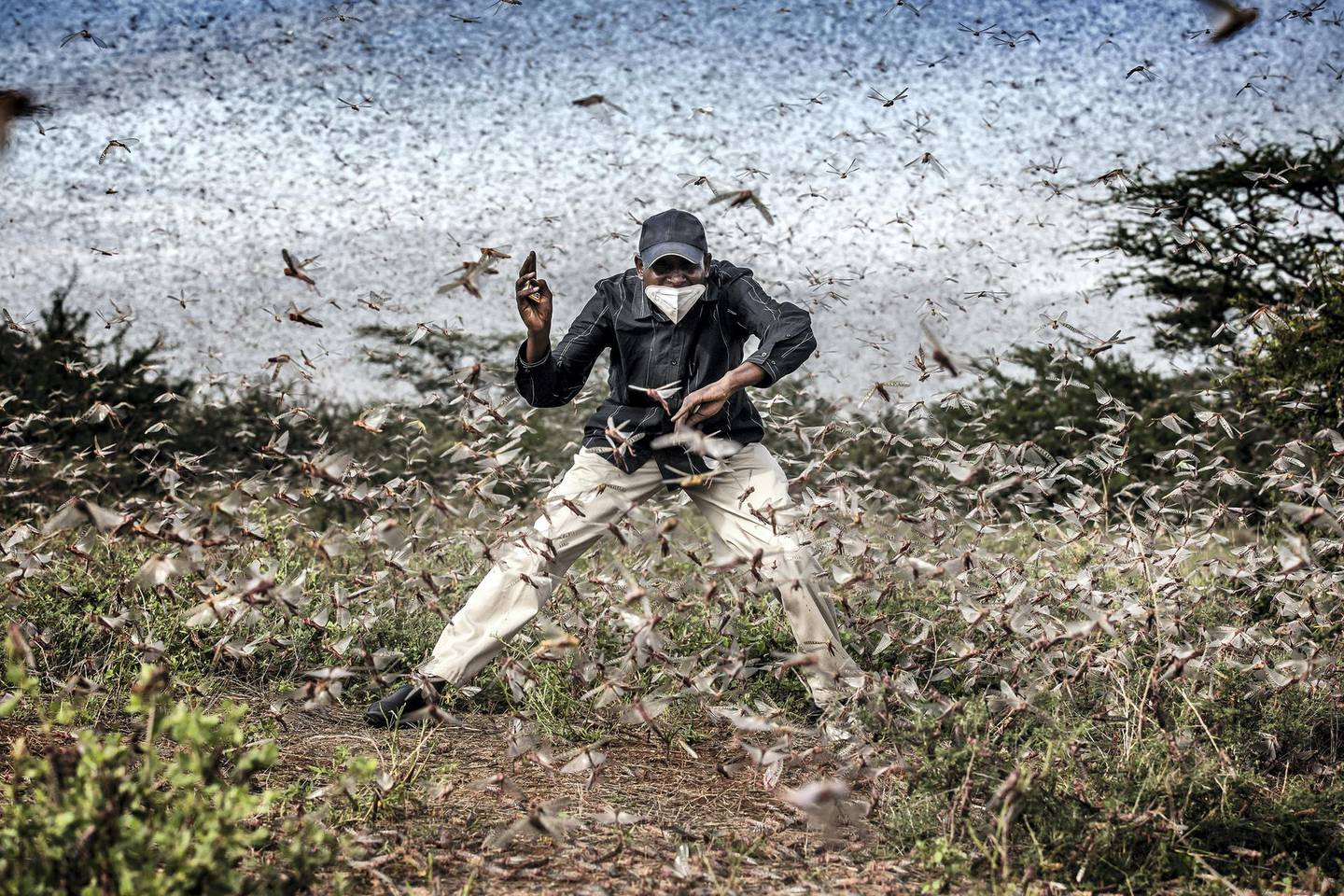 """Herny Lenayasa, a Samburu man and chief of the settlement of Archers Post tries to scare away a massive swarm of locust ravaging an area next to Archers Post, Samburu County, Kenya on April 24, 2020.A locust plague fueled by unpredictable weather patterns up to 20 times larger than a wave two months earlier is threatening to devastate parts of East Africa. Locust has made already a devastating appearance in Kenya, two months aftervoracious swarms -some billions strong- ravaged big areas of land and just as the coronavirus outbreak has begun to disrupt livelihoods. In spite of coronavirus-related travel restrictions, international experts are in place to support efforts to eradicate the pest with measures including ground and aerial spraying.The Covid-19 pandemic has competed for funding, hampered movement and delayed the import of some inputs, including insecticides and pesticides.The UN Food and Agriculture Organisation (FAO) has called the locust outbreak, caused in part by climate change, """"an unprecedented threat"""" to food security and livelihoods. Its officials have called this new wave some 20 times the size of the first.Photo: Luis Tato for The Washington Post"""
