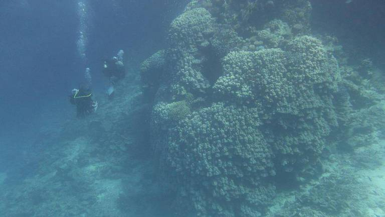An image that illustrates this article 600-year-old coral colony found at Saudi Arabia's Al-Waqadi Island
