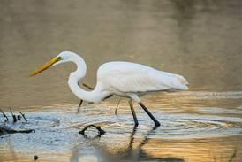Cyclone Shaheen: rare birds visiting Oman in wake of destruction