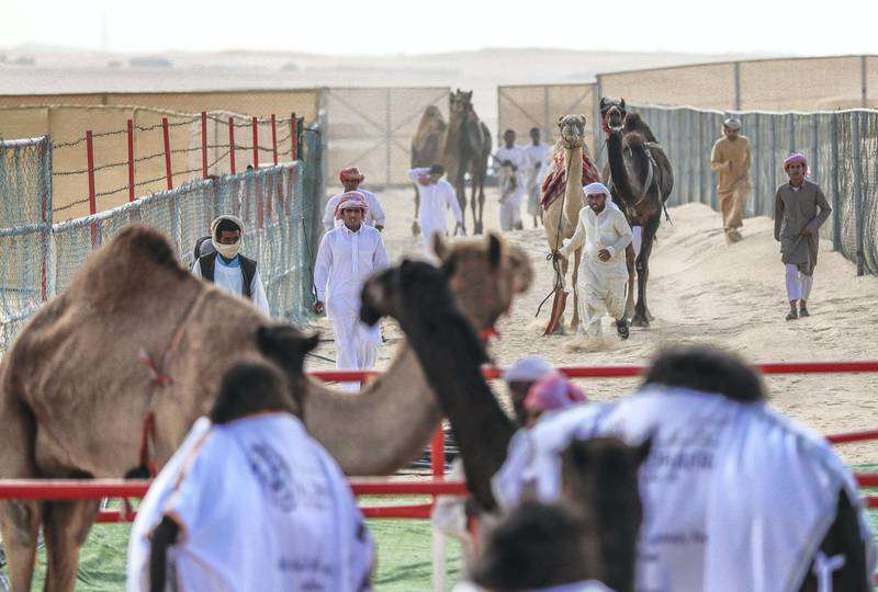 Abu Dhabi, United Arab Emirates, December 10, 2019.    Al Dhafra Festival 2019.--  Escorts arrive at the winners area before the parade.Victor Besa/The NationalSection:  NAReporter:  Anna Zacharias