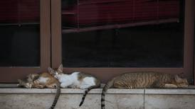 UAE welfare groups call for crackdown on illegal pet breeders