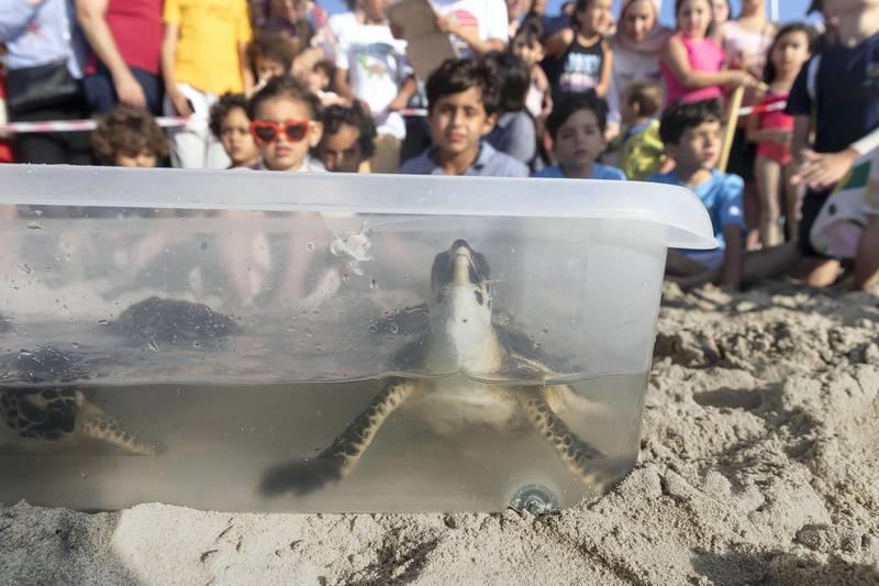 ABU DHABI, UNITED ARAB EMIRATES. 24 APRIL 2019. Turtle release at the Jumeirah at Saadiyat Island Resort. (Photo: Antonie Robertson/The National) Journalist: None. Section: National.