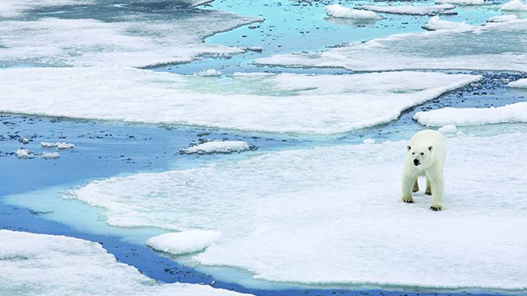 An image that illustrates this article Ice levels plummet by 90% in parts of Arctic Ocean