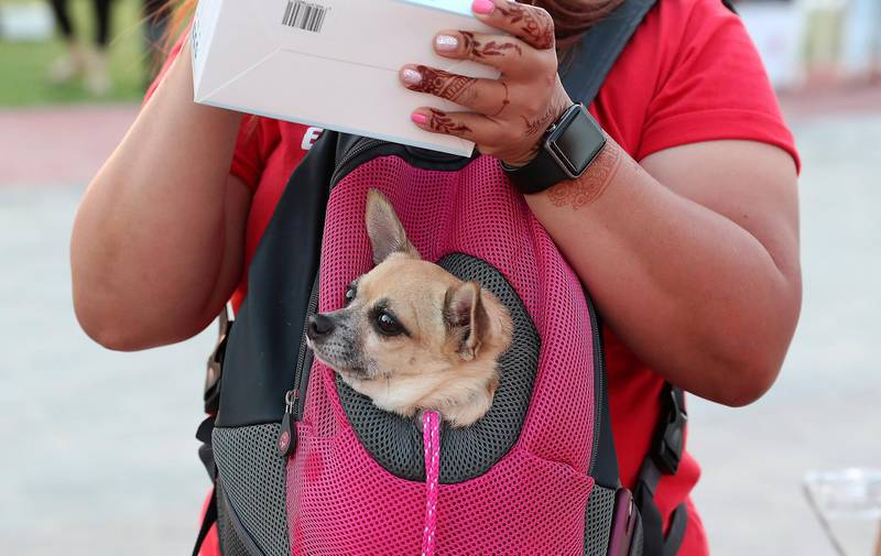 DUBAI, UNITED ARAB EMIRATES, December 10 – People arriving with their dogs for the official opening of  DAMAC Akoya Central Bark (dog park) in DAMAC Akoya Oxygen in Dubai. (Pawan Singh / The National) For Lifestyle/Online/Instagram. Story by Hayley