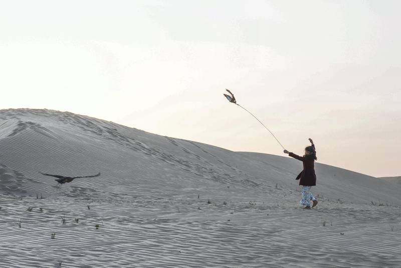 Osha whirls feathered, baited lure, as bird dives for it, yanks it away during an evening training session, after that falcon fed in Abu Dhabi , United Arab Emirates.Vidhyaa Chandramohan for The National