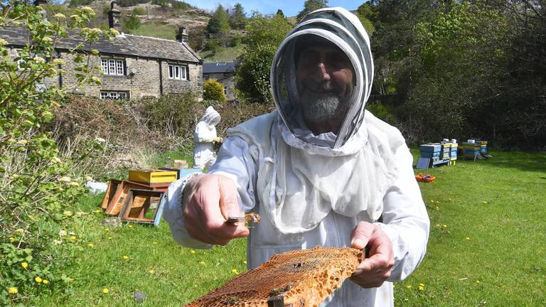 An image that illustrates this article Beekeeper of Aleppo trains refugees to protect British hives