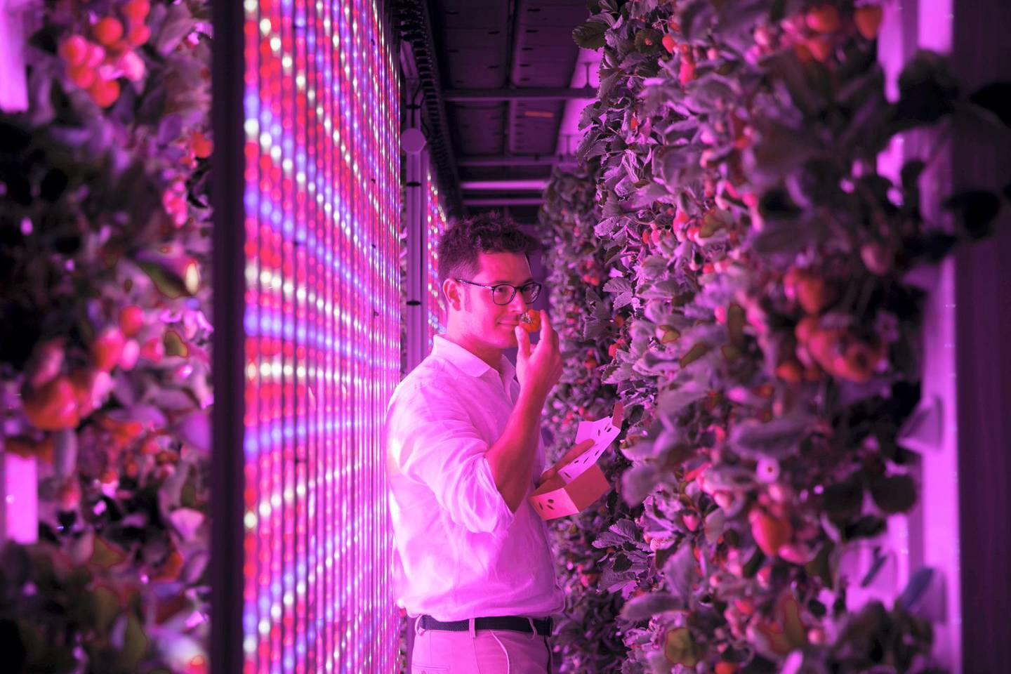 DUBAI, UNITED ARAB EMIRATES - SEPTEMBER 17, 2018. Georges Beaudoin, International Operations Manager, Agricool. Agricool grows strawberries in a shipping container in Sustainable City.Agricool is a french start-up that grows fruits and vegetables inside shipping containers, where they grow without pesticide, minimum water and nutrition intake, no GMOs, and are harvested the day you will purchase. (Photo by Reem Mohammed/The National)Reporter: LIZ COOKMANSection: NA