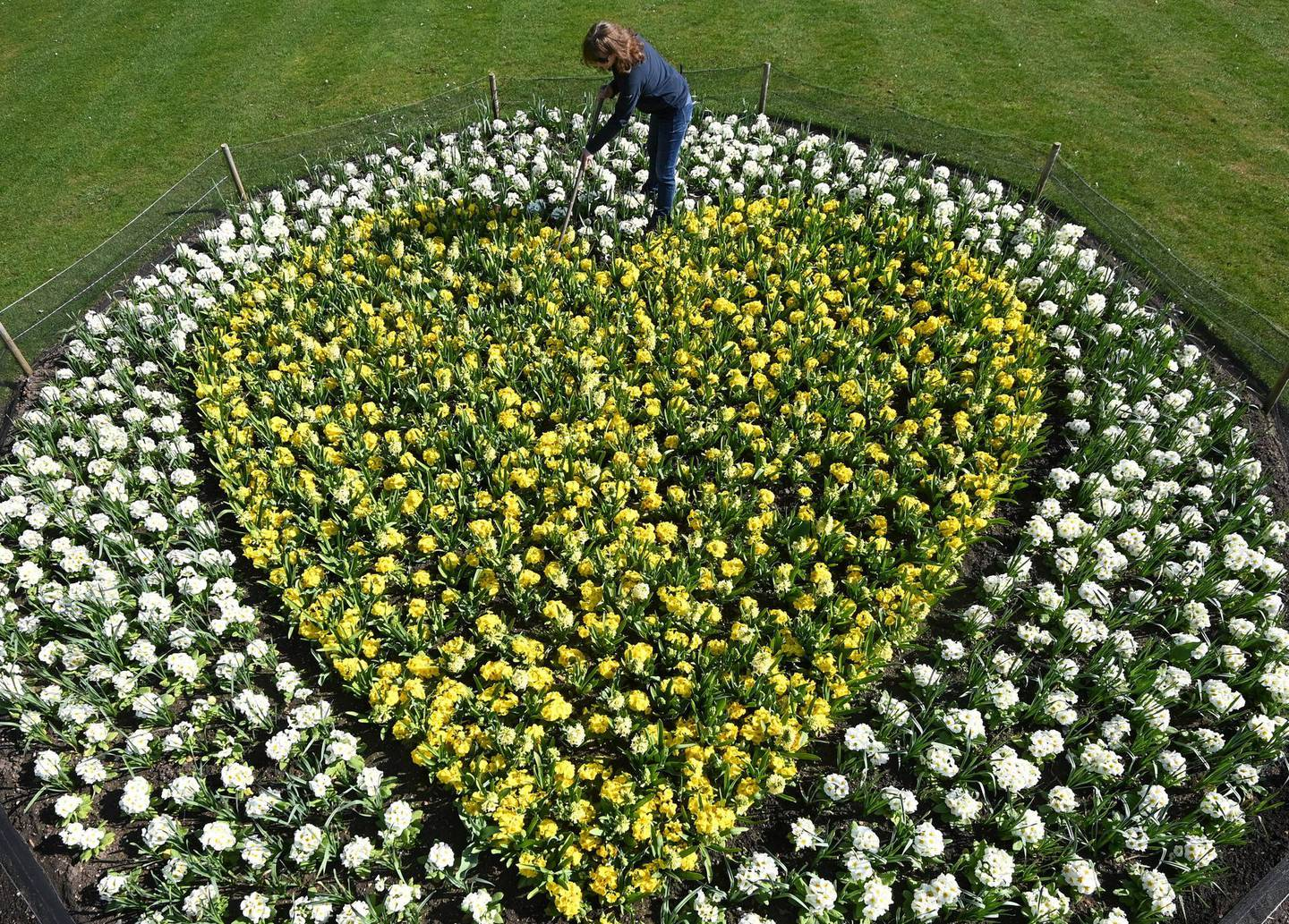 Kew horticulturalist Joanna Bates tends to a 'Yellow Hearts to Remember' planting tribute to remember those lost to COVID-19, a year since the first British lockdown began due to the coronavirus disease pandemic, Royal Botanic Gardens, Kew, London, Britain, March 22, 2021. REUTERS/Toby Melville
