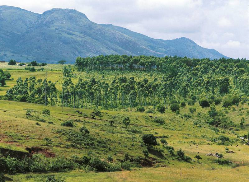 SWAZILAND - MAY 05: Wooded Savannah, Swaziland. (Photo by DeAgostini/Getty Images)