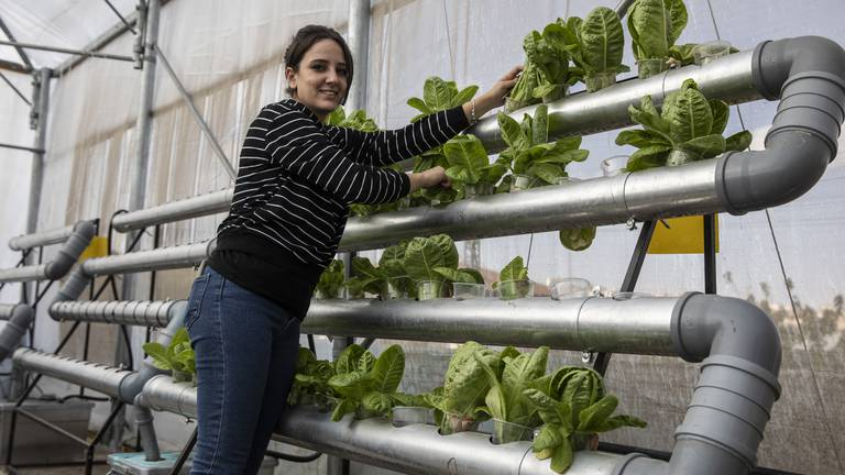 An image that illustrates this article Palestinians transform Bethlehem rooftop with innovative hydroponic farming