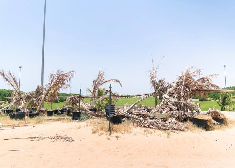 DUBAI, UNITED ARAB EMIRATES - JULY 15 2019.  Dead plants by the unfinished golf course at Living Legends.  Some residents and investors of Living Legends have paid Dh6m for villas, and pay Dh25,000 a year in service charges but the development still looks like a construction site, with an unfinished golf course, roads, open sewer works near the school, poor lighting and no desert boundary meaning dangerous snakes and animals are regularly getting into the gardens and villas.   (Photo by Reem Mohammed/The National)  Reporter: NICK WEBSTER Section: NA