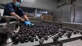 The Dubai date factory feeding global demand for healthy sugar alternatives