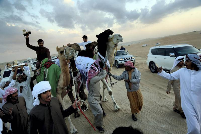 Al Dhafra, 17, Dec, 2017: Batoola the 3 year old Emirati camel was crowned beauty queen  been taken a  victory parade on the millions street during the Al Dhafra Festival in UAE  . Satish Kumar for the National/ Story by Anna