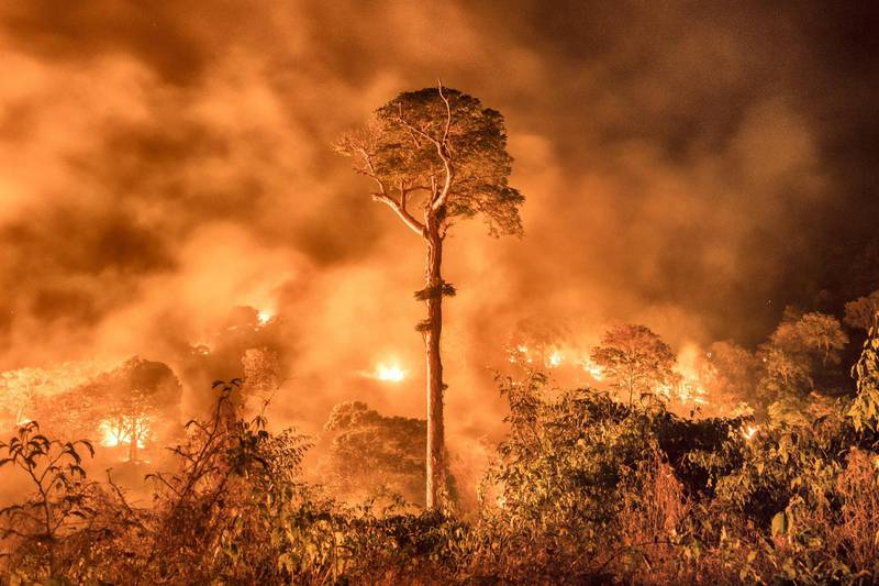 A fire burns out of control, burning forest in the Brazilian State of Maranhão. Most fires are started to clear land for cattle and agriculture - the fires get out of control due to increasingly dry conditions in the Amazon and burn surrounding forest. Maranhão, Brazil