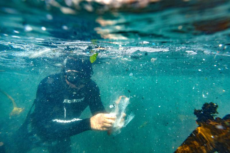 epaselect epa07322201 Millions of pieces of plastic, micro plastics and debris are seen in the ocean as a free diver collects plastic  during the Big Ocean Clean Up in Hermanus, South Africa, 26 January 2019. The Hermanus Big Ocean Clean Up is part of a four year ongoing marine debris survey co-ordinated by the South African Shark Conservancy combining with various environmental groups including Sea the Bigger Picture, Oceano Reddentes and Sea Shepherd. Various schools also participated with over 300 people collecting over 800 kilograms of debris in the clean up of a ten kilometer stretch of coastline both in the ocean and on land. Of particular concern was the massive amount of plastics encountered in the water. Hermanus is famous for its whale watching and pristine views but the reality of massive marine pollution under the water is a major concern for environmentalists.  EPA-EFE/NIC BOTHMA *** Local Caption *** 54936230