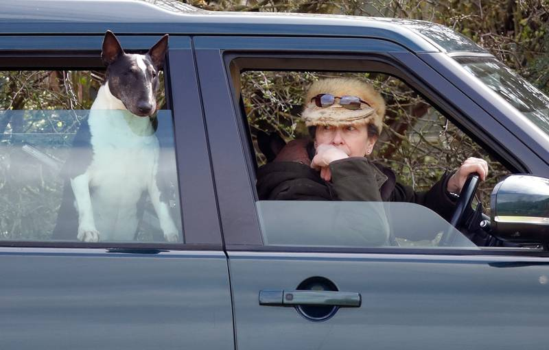 STROUD, UNITED KINGDOM - MARCH 23: (EMBARGOED FOR PUBLICATION IN UK NEWSPAPERS UNTIL 24 HOURS AFTER CREATE DATE AND TIME) Princess Anne, Princess Royal, with her bull terrier dog, seen driving her Land Rover Discovery as she attends the Gatcombe Horse Trials at Gatcombe Park on March 23, 2019 in Stroud, England. (Photo by Max Mumby/Indigo/Getty Images)