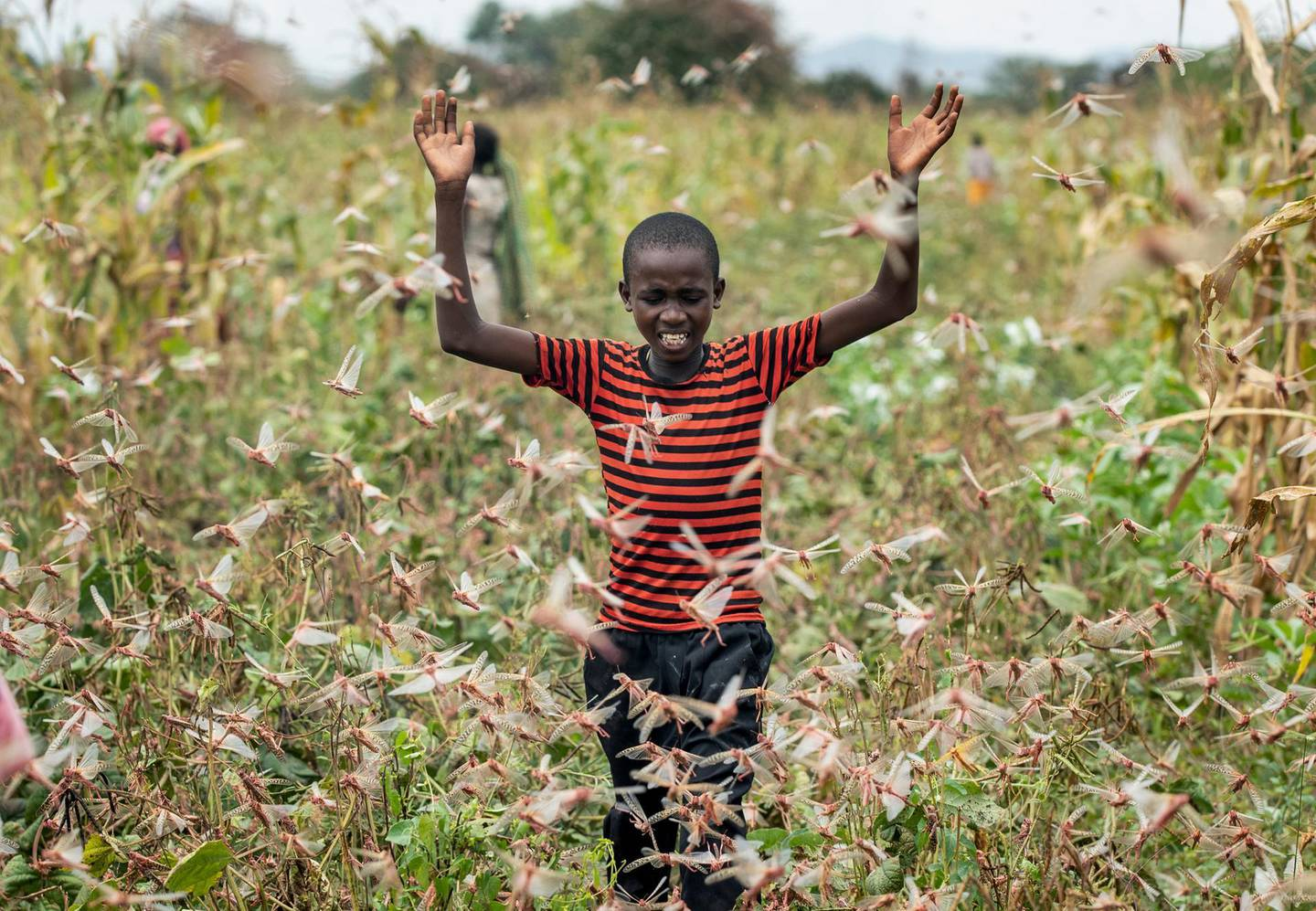 A farmer's son raises his arms as he is surrounded by desert locusts while trying to chase them away from his crops, in Katitika village, Kitui county, Kenya Friday, Jan. 24, 2020. Desert locusts have swarmed into Kenya by the hundreds of millions from Somalia and Ethiopia, countries that haven't seen such numbers in a quarter-century, destroying farmland and threatening an already vulnerable region. (AP Photo/Ben Curtis)
