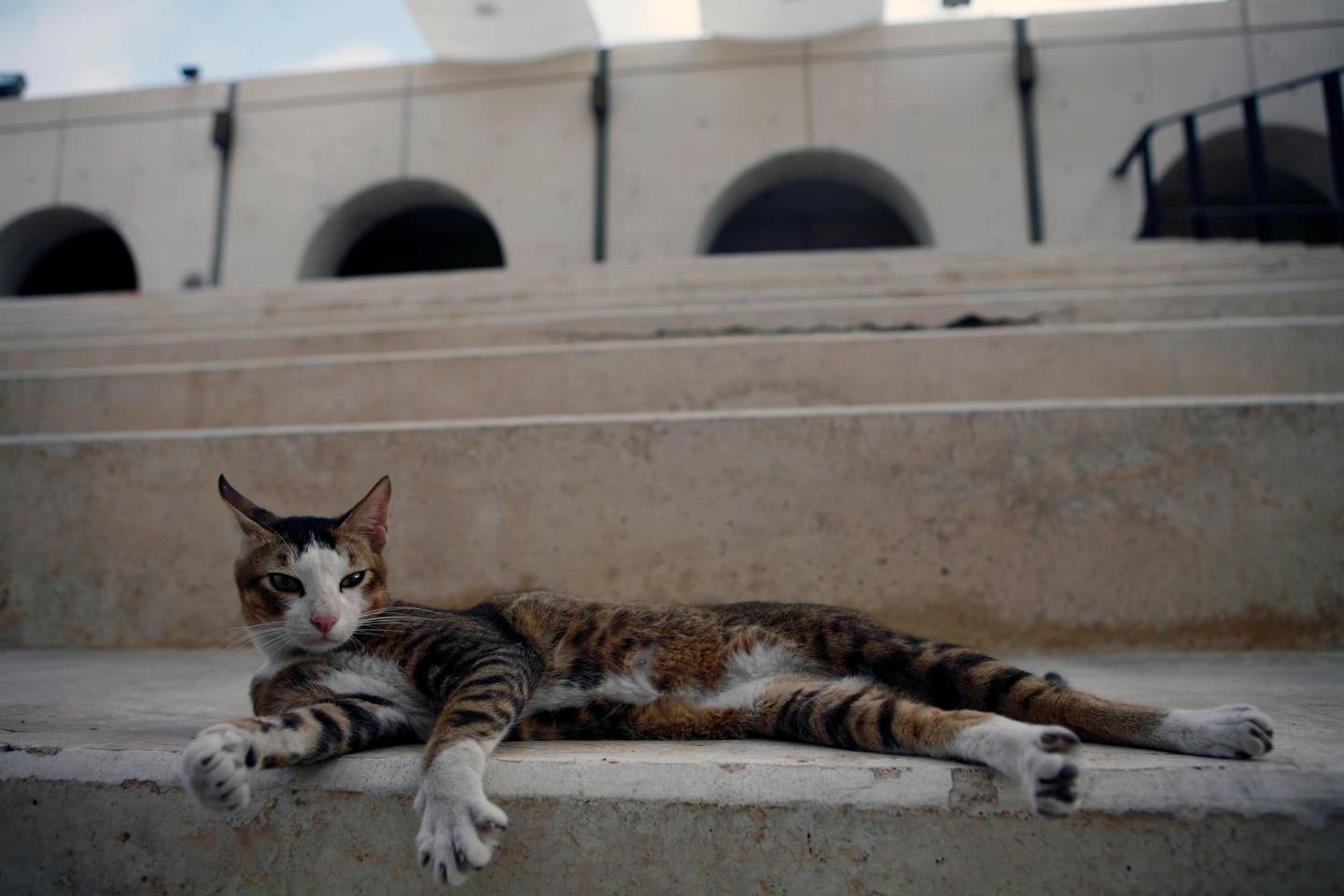 Abu Dhabi, UAE - December 24, 2008 - Stray cat at the Cultural Foundation. (Nicole Hill / The National)  ***FOR OASIS QUIZ PROJECT***  *** Local Caption ***  NH OasisQuiz13.jpgNH OasisQuiz13.jpg