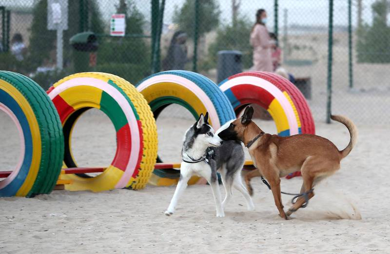 DUBAI, UNITED ARAB EMIRATES, December 10 – Dogs playing after the official opening of Central Bark (dog park) in DAMAC Akoya Oxygen in Dubai. (Pawan Singh / The National) For Lifestyle/Online/Instagram. Story by Hayley