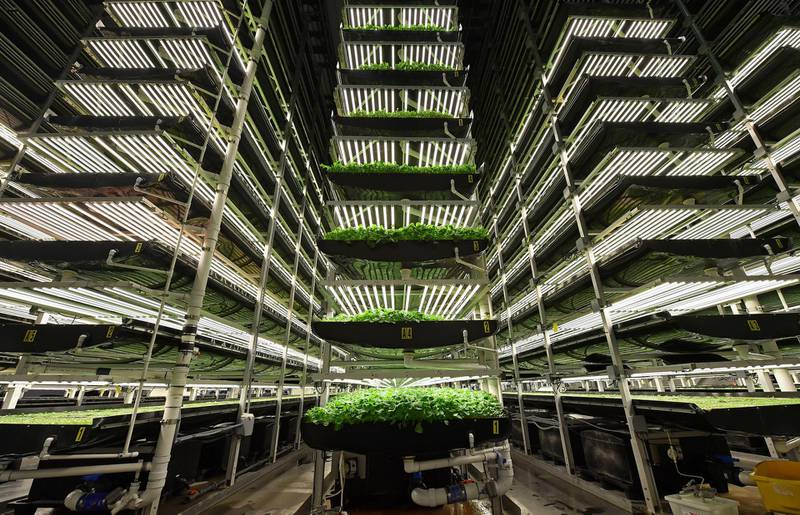 """AeroFarms' vertical grow towers on February 19, 2019, in Newark, New Jersey. - AeroFarms, founded in 2004, is the largest vertical farm in the world. The company is considered a pioneer of the sector. It has chosen to fully develop its own technologies which it exports around the world, with projects in China, the Middle East and Northern Europe, according to its co-founder Marc Oshima. (Photo by Angela Weiss / AFP) / TO GO WITH AFP STORY by Juliette MICHEL, """"How I found the taste of my grandmother's soup in a salad factory"""""""