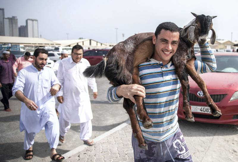 Abu Dhabi, United Arab Emirates, August 11, 2019.   Eid Al Adha at the Mina Livestock Market and Abattoir.-- Livestock to be brought to the slaughterhouse across the street for proper butchering.Victor Besa/The NationalSection:  NAReporter: John Dennehy