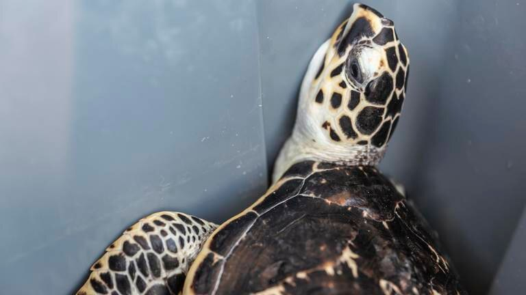An image that illustrates this article Turtle release