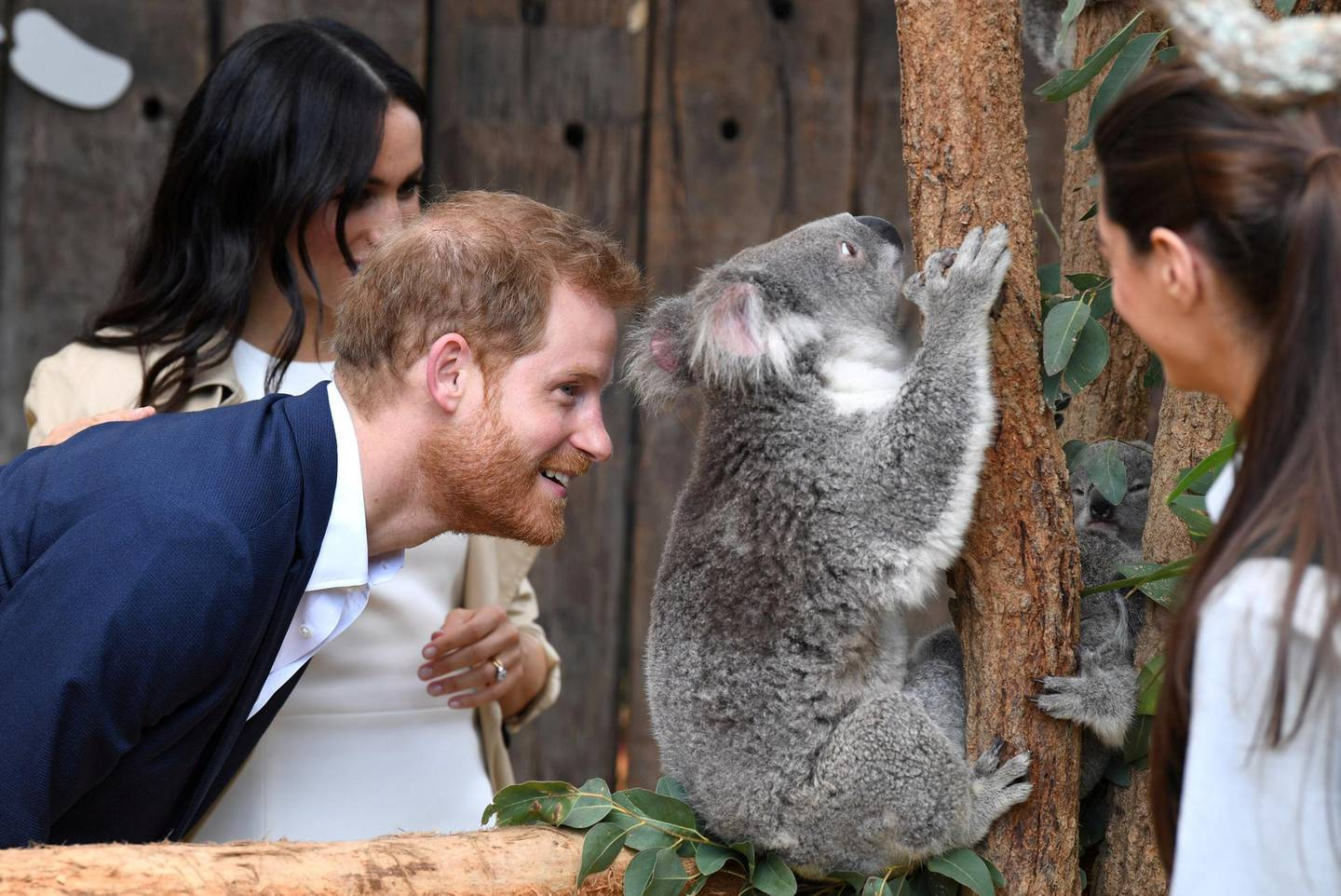 Britain's Prince Harry, the Duke of Sussex, and his wife Meghan, the Duchess of Sussex, are seen meeting Ruby, a mother Koala who gave birth to koala joey Meghan, named after Her Royal Highness, with a second joey named Harry after His Royal Highness, during a visit to Taronga Zoo in Sydney, Australia, October 16, 2018. AAP/Dean Lewins/POOL/via REUTERS  ATTENTION EDITORS - THIS IMAGE WAS PROVIDED BY A THIRD PARTY. NO RESALES. NO ARCHIVE. AUSTRALIA OUT. NEW ZEALAND OUT. TPX IMAGES OF THE DAY  ?